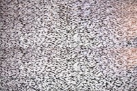 10 million Poles switch to digital television