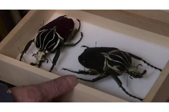 Insects by Jan Svankmajer