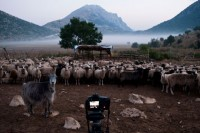 PRODUCTION: Doc coproduction The Last Transhumance in Postproduction