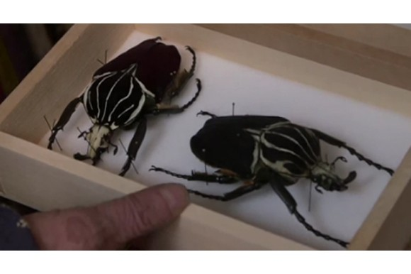 Švankmajer Crowdfunds Insects